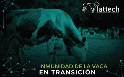 LA ETAPA DE TRANSICION Y SUS RIESGOS
